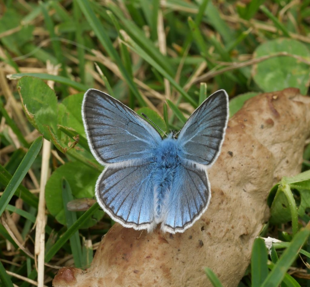 PREDICTOR. Butterflies as indicators and predictors of global change in the Natura 2000 Network